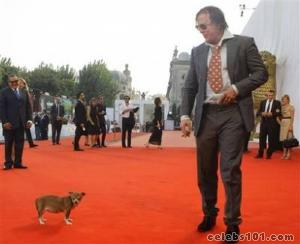 Mickey Rourke's beloved Chihuahua dies in his arms